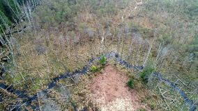 Vuelo aéreo del abejón sobre pantano y bosque almacen de video