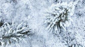 Vuelo aéreo sobre el bosque nevoso del abeto del invierno metrajes