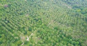 Vuelo aéreo sobre la plantación de la palmera almacen de metraje de vídeo