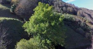 Vuelo ascendente que pasa muy cercano al top de un árbol almacen de metraje de vídeo