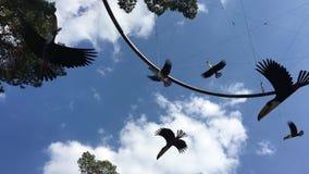 Vuelo de giro de la decoración de los pájaros en fondo del cielo metrajes