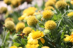 vuelo de la abeja Foto de archivo