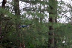 Vuelo de la cámara del abejón en el cielo mientras que el fondo de las selvas tropicales imágenes de archivo libres de regalías