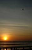 Vuelo de la cometa en la playa con puesta del sol Fotos de archivo