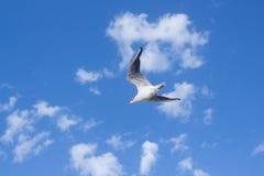 Vuelo de la gaviota en cielo azul de las nubes Imagenes de archivo
