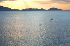 Vuelo de la gaviota en el amanecer Foto de archivo libre de regalías
