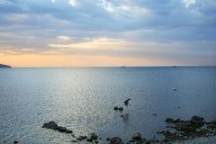 Vuelo de la gaviota en el amanecer Fotos de archivo