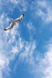 Vuelo de la gaviota en el cielo Foto de archivo libre de regalías