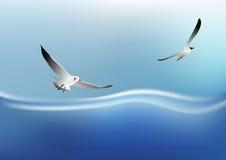 Vuelo de la gaviota en el mar Imagen de archivo libre de regalías