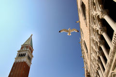 Vuelo de la gaviota en Venecia Imagen de archivo libre de regalías