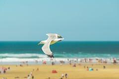 Vuelo de la gaviota sobre la playa Fotos de archivo libres de regalías
