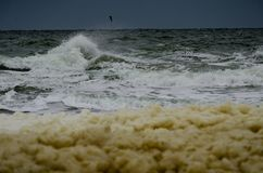 Vuelo de la gaviota sobre las ondas tempestuosas del mar imagen de archivo