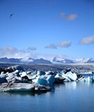 Vuelo de la gaviota sobre los icebergs Foto de archivo libre de regalías