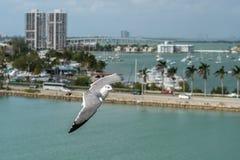 Vuelo de la gaviota sobre Miami, la Florida imagenes de archivo