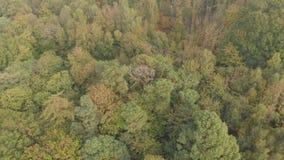 Vuelo de la opinión aérea del bosque del otoño almacen de metraje de vídeo