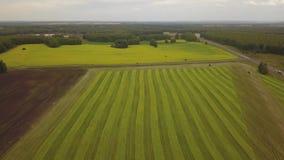 Vuelo de la opinión de Erial sobre un campo con trigo almacen de video