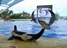 Vuelo de la orca Foto de archivo
