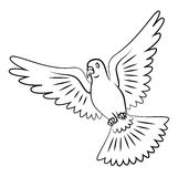 Vuelo de la paloma Fotografía de archivo