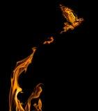 Vuelo de la paloma de la llama del flire anaranjado aislado Fotografía de archivo