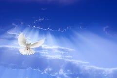 Vuelo de la paloma del blanco en el cielo Foto de archivo