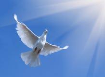 Vuelo de la paloma en cielo azul foto de archivo