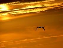 Vuelo de la puesta del sol Foto de archivo libre de regalías