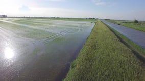 Vuelo de los campos del arroz metrajes