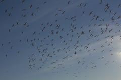 Vuelo de los pájaros Fotografía de archivo libre de regalías