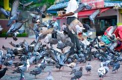Vuelo de los pájaros Fotos de archivo
