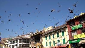 Vuelo de los pájaros de la paloma sobre los tejados en el cuadrado del templo de Katmandu Boudhanath en Nepal almacen de video