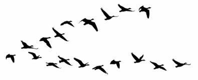 Vuelo de pájaros Imagenes de archivo
