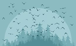 Vuelo de pájaros Foto de archivo libre de regalías