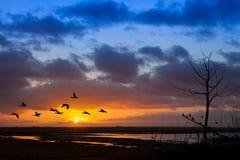 Vuelo de pájaros en el amanecer Fotografía de archivo