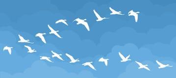 Vuelo de pájaros en el cielo Fotografía de archivo libre de regalías
