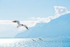 Vuelo de Seaguls contra las montañas Imagen de archivo
