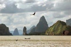 Vuelo de un águila de mar Imagen de archivo libre de regalías