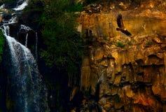 Vuelo del águila Fotografía de archivo libre de regalías