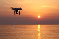 Vuelo del abejón contra un cielo de la puesta del sol Fotos de archivo libres de regalías