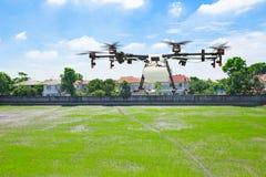 Vuelo del abejón de la agricultura en el campo verde del arroz Imágenes de archivo libres de regalías