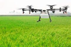 Vuelo del abejón de la agricultura en el campo verde del arroz Fotografía de archivo libre de regalías