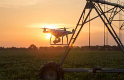 Vuelo del abejón delante del sistema de irrigación en campo en la puesta del sol Foto de archivo libre de regalías