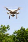 Vuelo del abejón en aire y cielo azul en el bosque Fotografía de archivo