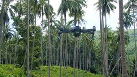 Vuelo del abejón en arboleda de la palmera almacen de video