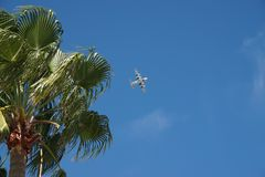 Vuelo del avión del guardacostas de Estados Unidos con la palmera fotografía de archivo