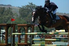 Vuelo del caballo Fotografía de archivo libre de regalías