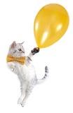 Vuelo del gatito del gato con un globo de oro Fotografía de archivo libre de regalías