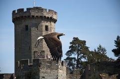 Vuelo del águila en el castillo de Warwick Fotos de archivo libres de regalías