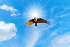 Vuelo del halcón en el cielo Foto de archivo