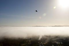 Vuelo del halcón sobre las nubes Imágenes de archivo libres de regalías
