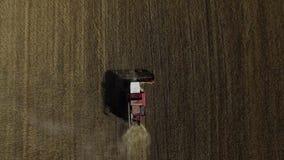 Vuelo del helic?ptero sobre campo de trigo maduro de oro rayado con la cosechadora almacen de video